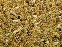 Agaporniden zaden